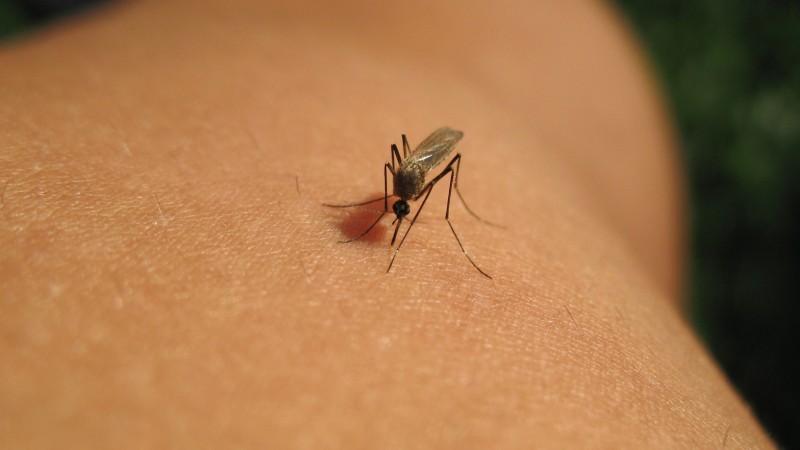 Mücken und Moskitonetze